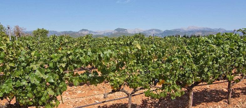 Pla i Llevant Mallorca