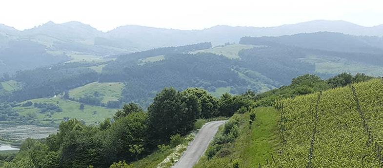 Vino de la Tierra Costa de Cantabria