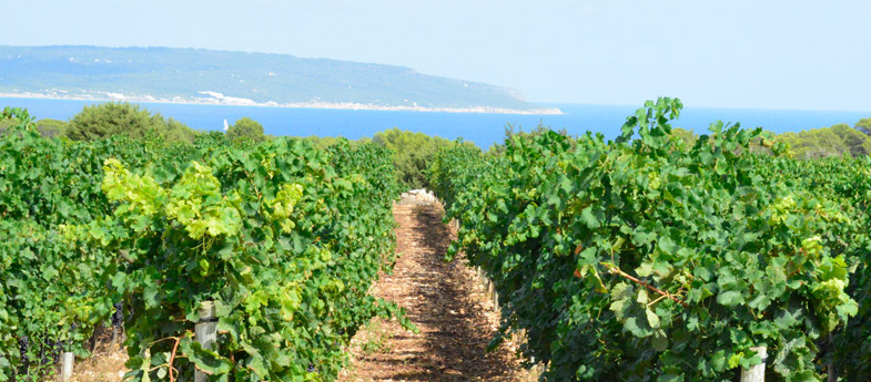Vino de la Tierra de Formentera