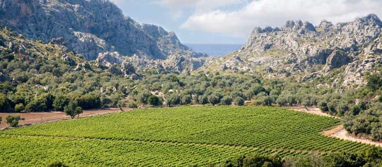 Vino de la Tierra de Mallorca